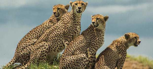 Mostra fotográfica África Yetu