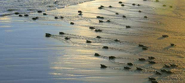 Passando o Rodo nas Praias